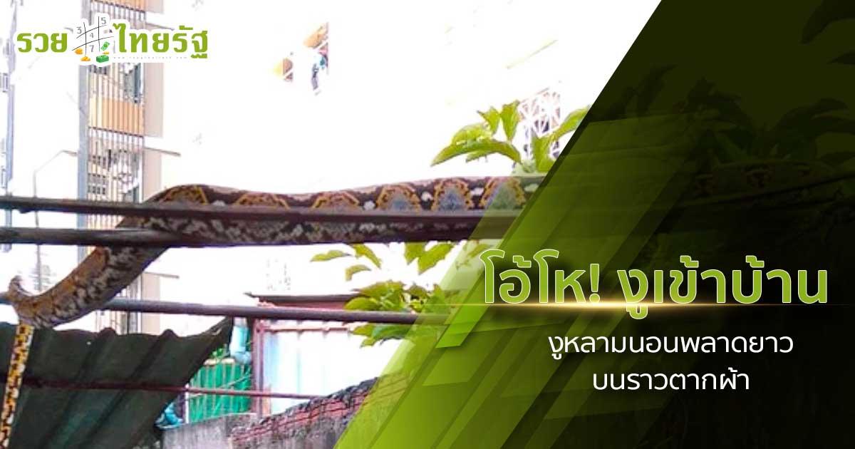 งูหลามยักษ์ พาลูกเลื้อยข้ามกำแพง นอนพาดราวตากผ้า